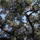 Trees thumbnail