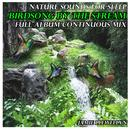 Nature Sounds for Sleep: Birdsong by the Stream thumbnail