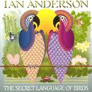The Secret Language Of Birds thumbnail