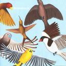 Looks At The Bird thumbnail