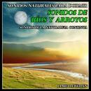 Sonidos Naturales para Dormir: Sonidos de Ríos y Arroyos thumbnail