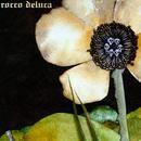 Rocco DeLuca thumbnail