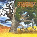Young Tree thumbnail
